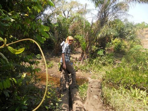 Weg zu den Ananasfeldern von Tamidie