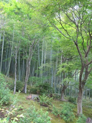 Bambuswald im Tenryji